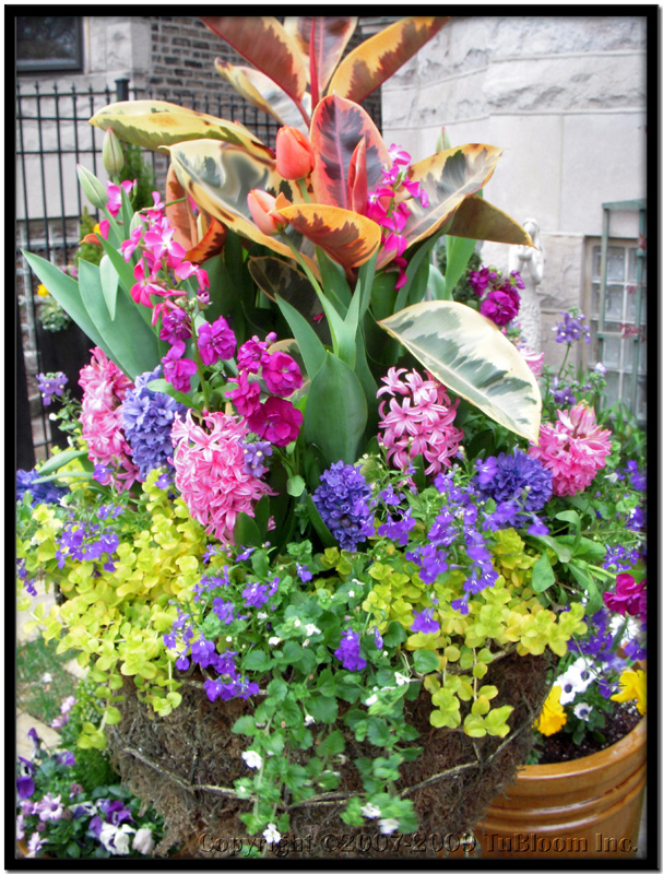 Tu bloom spring chicago garden design and landscape services blooms spring container garden design mightylinksfo