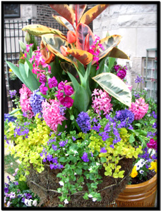 Bloom's Spring Container Garden Design