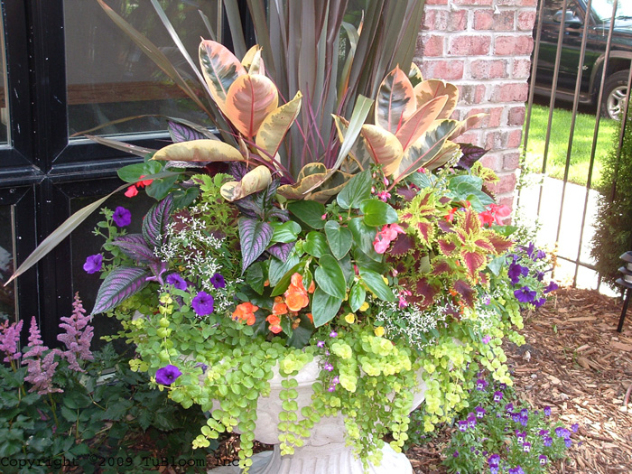 Container Garden Design choose a filler Residential Container Garden Landscape Design Accented With Multi Color Annuals