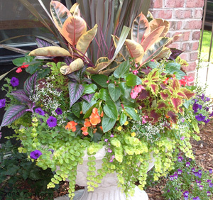 residential container garden landscape design accented with multi-color annuals