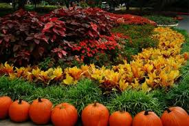 BLOOMS FALL GARDEN CARE TIPS CHICAGO GARDEN LANDSCAPE DESIGN
