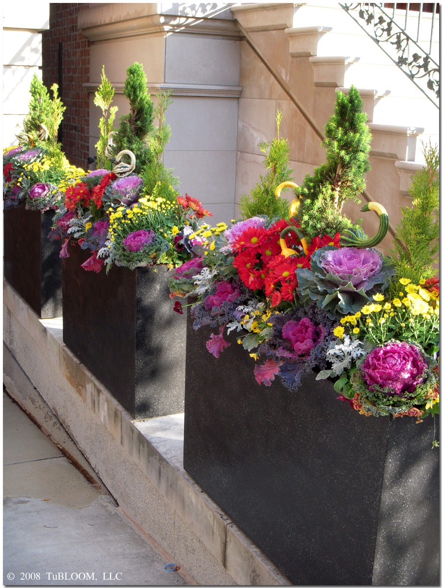 BEAUTIFICATION by Tu BLOOM Luxury Garden Designs