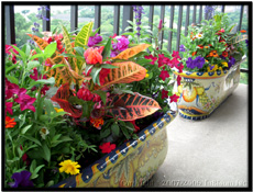 oval italian deco fiberglass balcony planters - decked out with color zinnias, coleus, petunias and much more