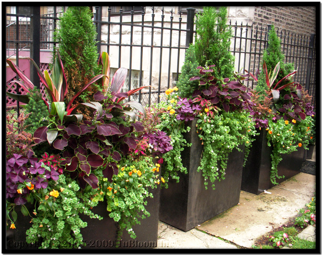 Container Garden Design residential container garden landscape design accented with multi color annuals Blooms Spring Container Garden Design