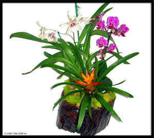 Chicago Floral Designs by Tu Bloom - Premium Orchid Collection