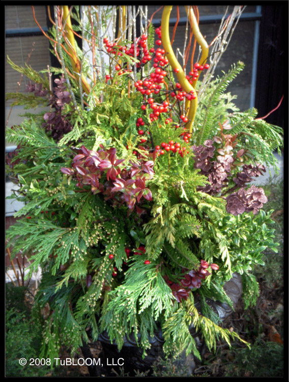 Winter Container Garden Ideas Photograph Luxury Landscape