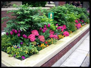 spring residential & commercial gardens