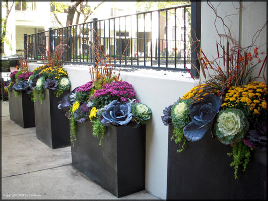 gorgeous award winning container garden lanscape designs by tu bloom designs inc