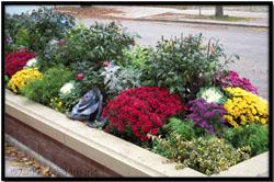 successive parkway garden landscape plant designs by tu bloom