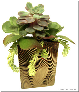 Succulent Garden Design by Tu Bloom
