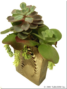 [side view] Succulent Indoor Garden Design