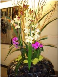 orchid indoor plantscape designs by tu bloom garden designs inc