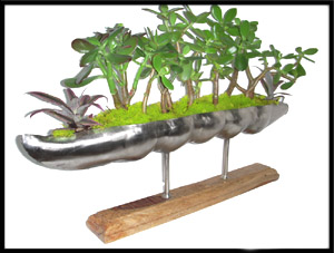 indoor plant designs and installations by tubloom designs inc. jade trees set in metallic peapod contemporary decor